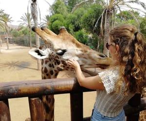 animals, fuerteventura, and wonderland image