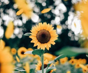 I would rather receive one sunflower from you, than one million roses from another boy. 🌻