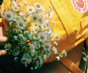 yellow, aesthetic, and daisy image