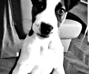 dog, black and white, and happines image