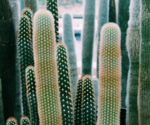 aesthetic, indie, and cactus image