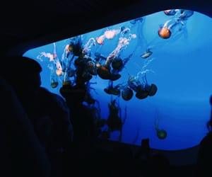 aesthetic, aesthetics, and aquarium image