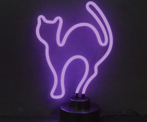 cat, neon, and purple image