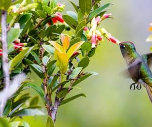 aves, flores, and fotografía image