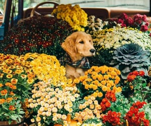 autumn, dog, and flower image