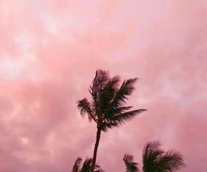 collection, palmtrees, and pink image