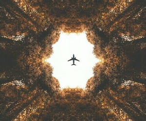 airplane, fly, and trees image