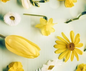 flower, flowers, and yellow image
