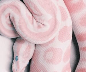 aesthetic, pink, and snake image