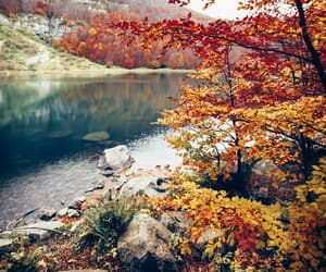 autumn, fall, and nature image