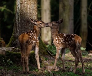 animals, deer, and fawn image
