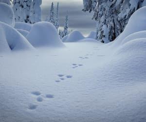 footprints, scenery, and season image