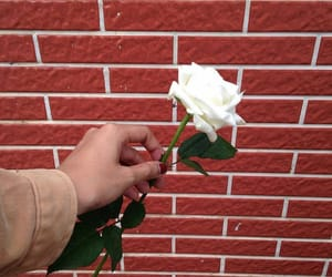 alternative and rose image