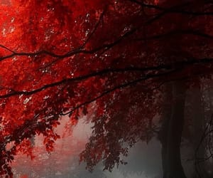 autumn, beautiful, and fall image