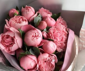 couple, flowers, and pink roses image