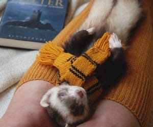 harry potter, ferret, and thebookferret image