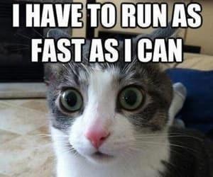 pets, funny, and humor image