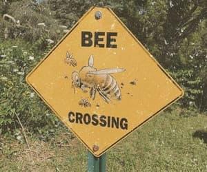 aesthetic, bee, and yellow image
