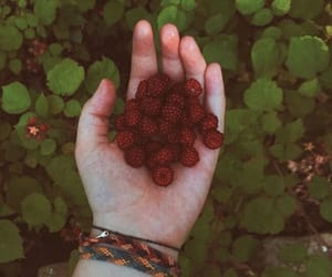 aesthetic, blackberry, and raspberry image