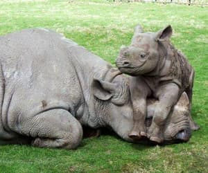 animal, rhino, and baby image