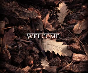 autumn, leaves, and welcome image