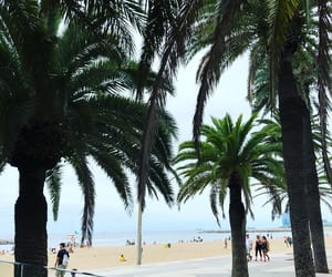 Barcelona, beach, and palm image