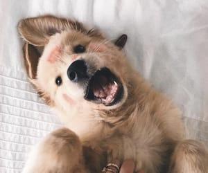 adorable, funny, and animal image