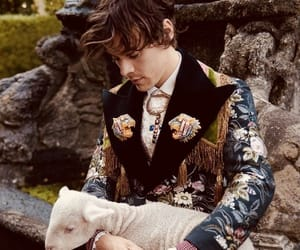 gucci, harrystyles, and harry image