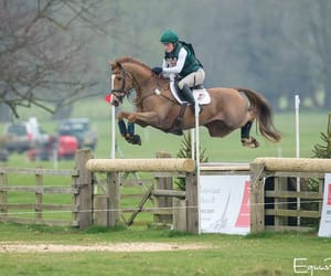 chestnut, country, and jump image
