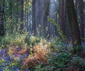 enchanted, trees, and warwickshire image