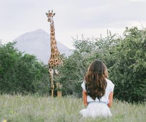 beauty, freedom, and giraffe image