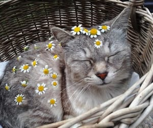 cat, roses, and cute image