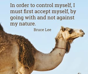 bruce lee and quote image