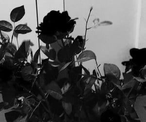 black, flowers, and header image