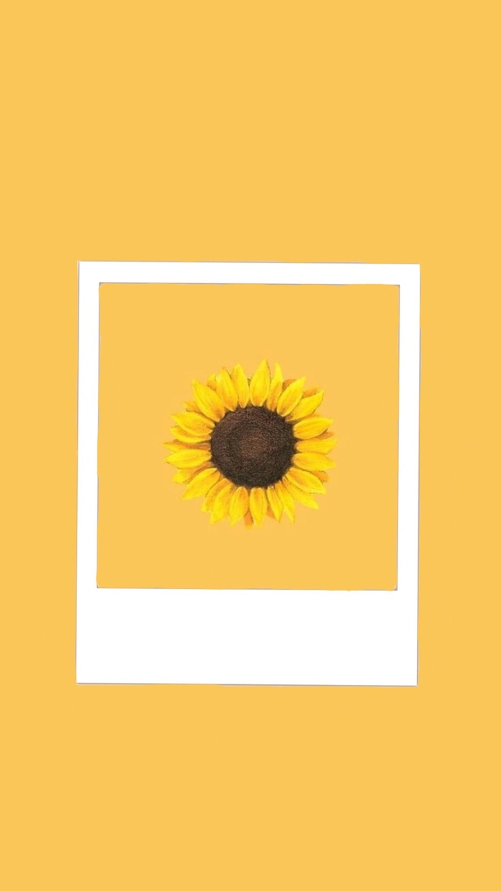 I M A Sunflower A Little Funny On We Heart It