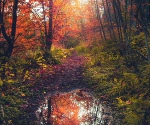 autumn, columbia, and fall image