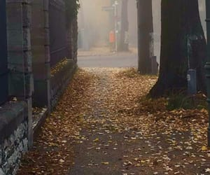autumn, berlin, and fall image