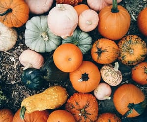 article, autumn, and baking image