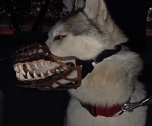 dog, dark, and animal image