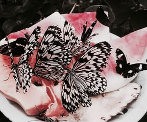 theme, rp, and butterfly image