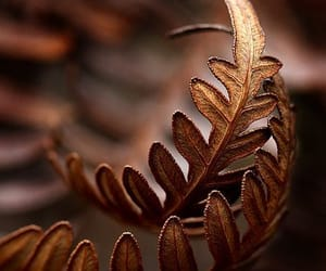 autumn, brown, and leaves image