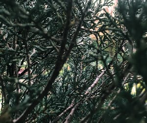 phtography, baguio, and green aesthetics image