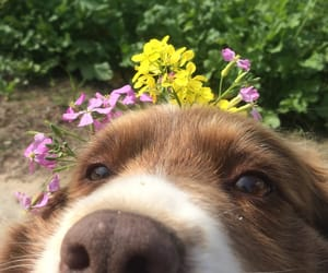 adorable, dog, and flowers image