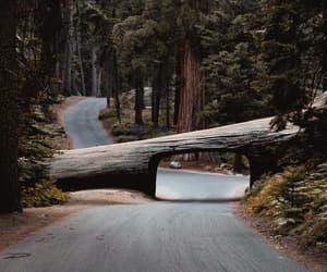 nature, tree, and adventure image