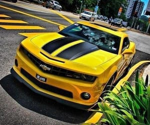 black, yellow, and bumblebee image