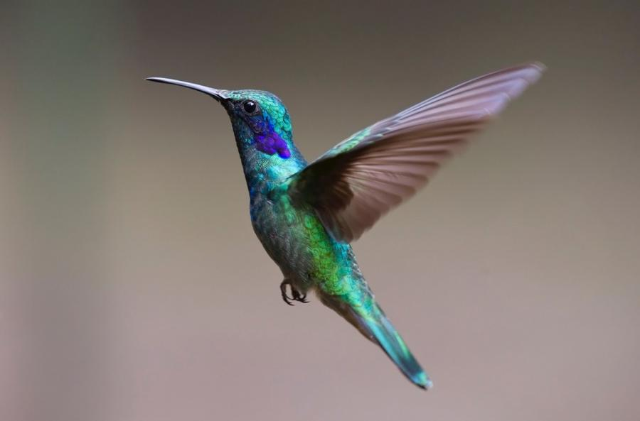 article, beauty, and colibri image