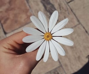 aesthetic, flower, and summer image