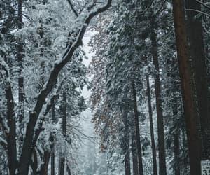 beautiful, snow, and tree image