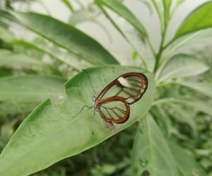 animal, green, and butterfly image