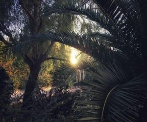 botany, sunset, and woodland image